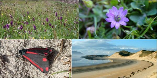 Sheskinmore Nature Reserve